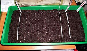 Подготовка грунта и емкостей