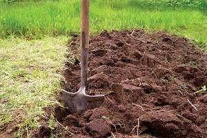 Как выбрать почву для посадки