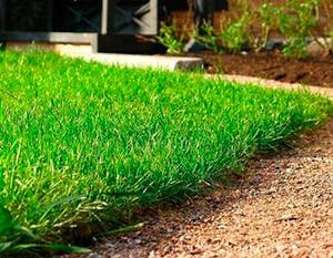 Как выбрать газонную траву