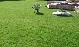 Особенности газонной смеси