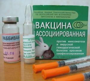 вакцинация_кроликов