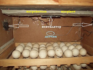 kak-sdelat-ventilyator-v-inkubatorah-27876-large444