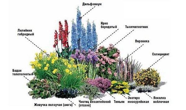 Подбор многолетних растений для оформления цветника