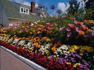 Декоративные многолетние растения