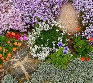 Особенности почвопокровных растений