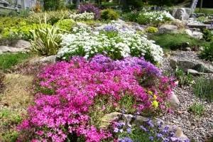 Почвопокровные многолетние цветы