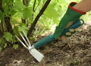 Рыхление - одна из важных забот садовода