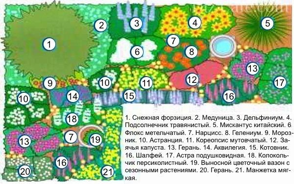 Цветник непрерывного цветения_Схема_1