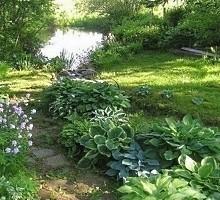 Тенелюбивые многолетники для сада