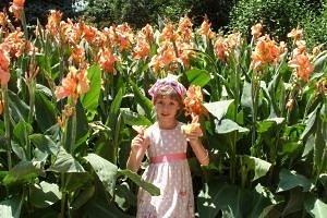 Высокорослые многолетние цветы для сада