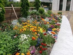 Правильный подбор растений для клумбы обеспечит её цветение круглый год