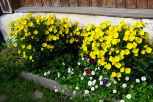 Летние цветы желтого цвета