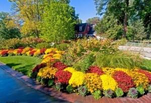 Фото-пример контрастного оформления клумбы из многолетних цветов