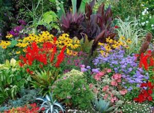 Разбивая клумбу, важно правильно подобрать многолетние растения и уметь правильно их сочетать