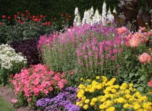 Эффектный цветник - результат правильного сочетания растений друг с другом