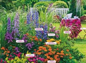 Вариант оформления цветника из многолетников