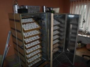 Инкубатор с полуавтоматическим переворотом яиц