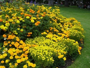 Монохромный жёлтый цветник