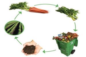 Схема круговорота от овощей до компоста