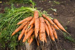 Как показывает практика, овощи с налипшими комками земли хранятся лучше