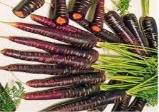 Фиолетовая морковь своей окраской обязана антоциану – особому веществу, которое помогает бороться с сердечно-сосудистыми заболеваниями и угрозой рака