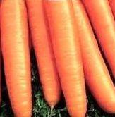 Урожайность «Нантская 4» - 3 – 7 кг/м2