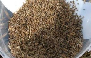 По своему виду семена моркови напоминают семена тмина или укропа