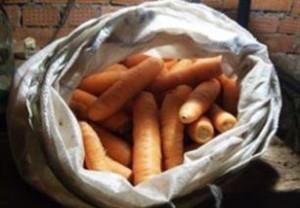Если морковь хранится в плотно закупоривающихся мешках, то в них нужно сделать отверстия для вентиляции