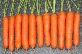 Один из самых популярных сортов моркови - Нантская