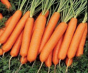 Листья Нантской моркови занимают 25% массы овоща
