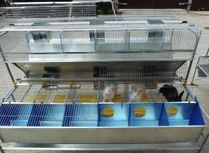Современное оборудование для разведения кроликов