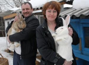 Кролики - доходное дело