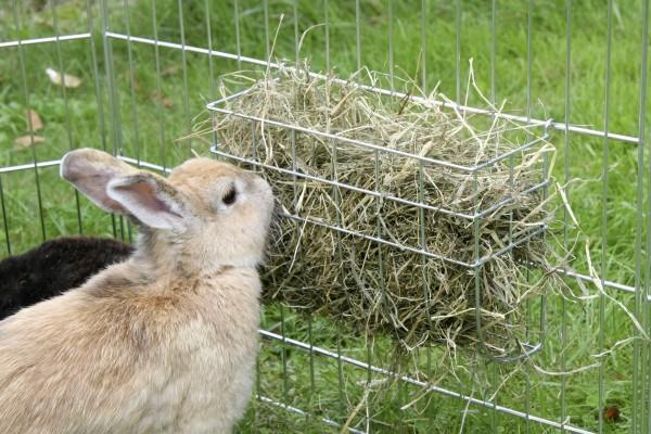 Нормальная жизнедеятельность кролика невозможна без сена
