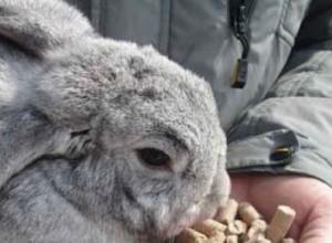 Рецепт правильного питания кролика - качественный комбикорм
