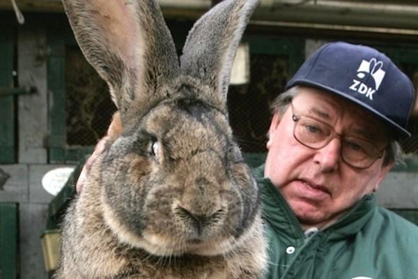 Разведение кроликов - рентабельный бизнес