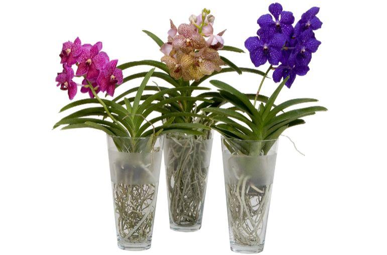 домашние орхидеи уход