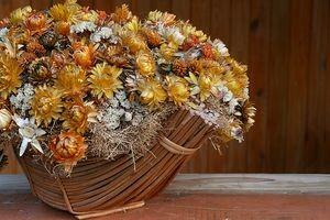 Высушенные цветы гелихризума широко используются для составления букетов