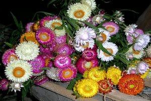Цветовая палитра соцветий может быть самой разнообразной