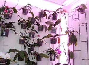 Боковой свет - одно из условий правильного выращивания орхидей