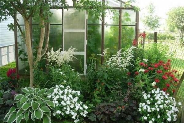 Благодаря высокому росту, астильба создает фон для более низкорослых цветов, поэтому часто используется в миксбордере