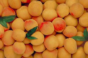 Какие сорта абрикосов можно выращивать в подмосковье