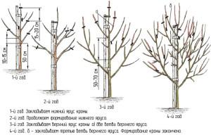 Осенняя обрезка груши (нажмите для увеличения)
