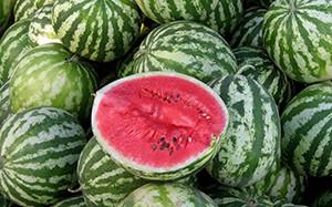 В Астрахань семена арбуза были завезены из Южной Африки, которая считается родиной бахчевой культуры