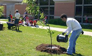 Полив деревьев из ведра
