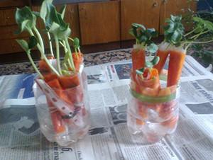 Рассада арбуза в «пеленках»