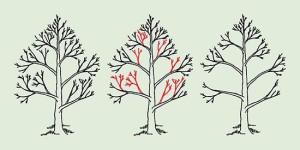 Обрезка груши весной (нажмите для увеличения)