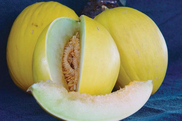 Tweety-Canary-Melon-Seeds-Sunrise-Seeds-Inc