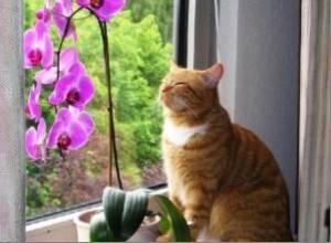 Лучше слегка подсушить орхидею, чем залить её