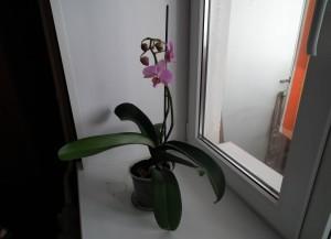 Вертикальная опора поможет орхидее не сломаться под тяжестью цветов