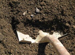 Подготовка почвы для посадки семян дыни